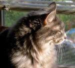 His Most Serene Fluffybutt enjoying the sun porch