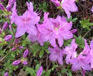 Blooms at the arboretum