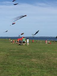 Kites at Harkness Memorial State Park