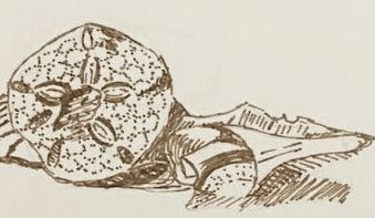 shells-sanddollar