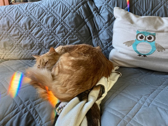 An orange cat asleep on a grey sofa with an owl pillow behind him, and rainbows of light on his tail and to his left.